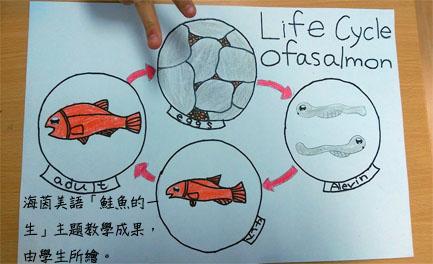 海茵美語鮭魚的一生主題教學成果